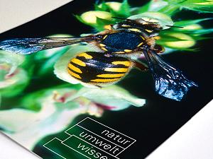 Strahlende Bilder auch auf Naturpapier. Dank der LED-Offsetdrucktechnologie