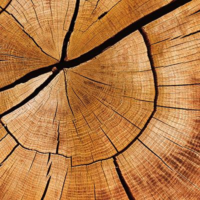No. 3. Holz